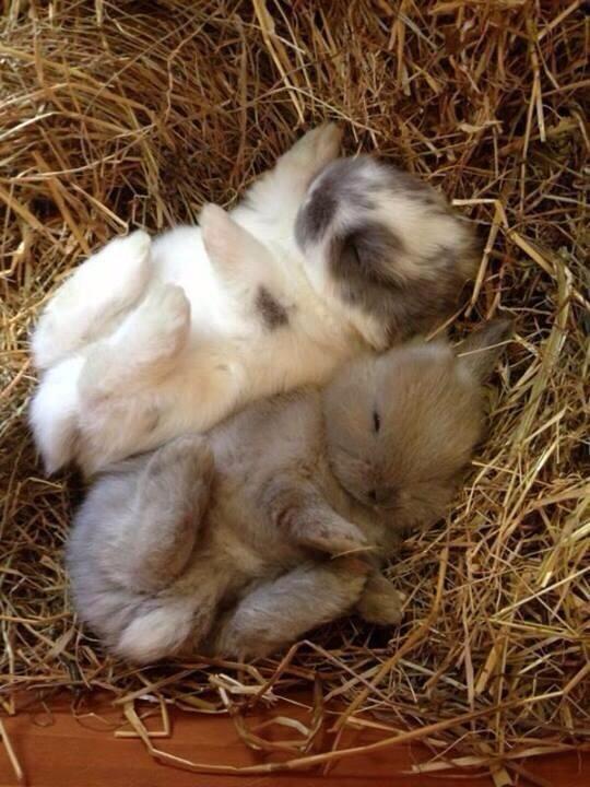 Пушистые зайцы фото и картинки (22)
