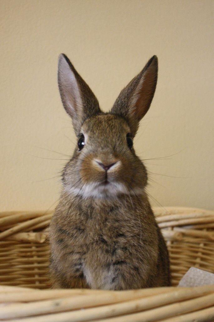 Пушистые зайцы фото и картинки (24)