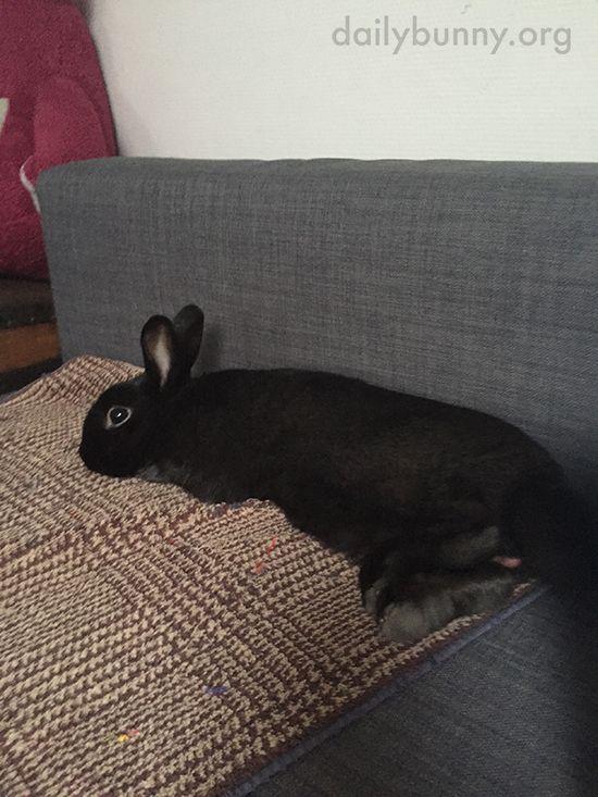 Пушистые зайцы фото и картинки (25)