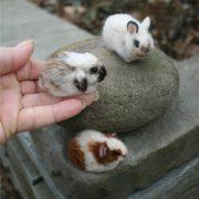 Пушистые зайцы фото и картинки (3)
