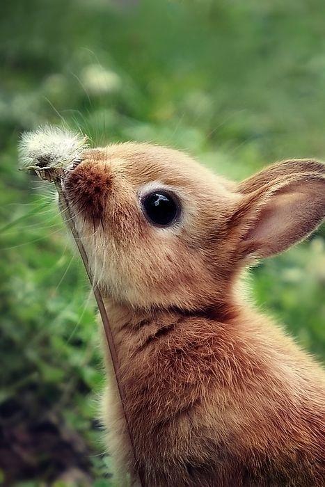 Пушистые зайцы фото и картинки (4)