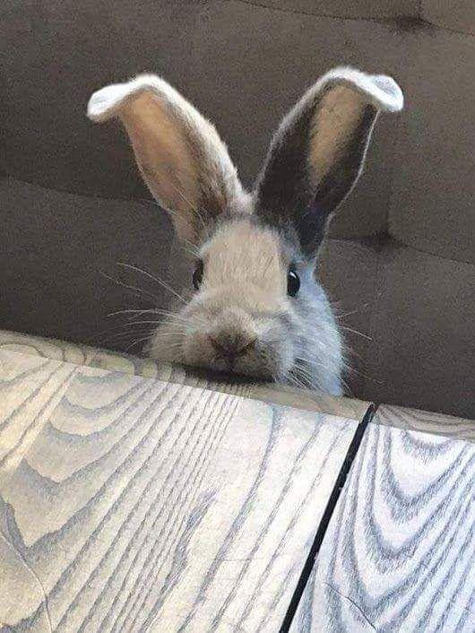 Пушистые зайцы фото и картинки (5)