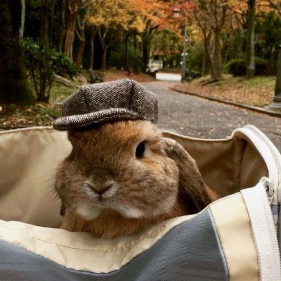 Пушистые зайцы фото и картинки (7)