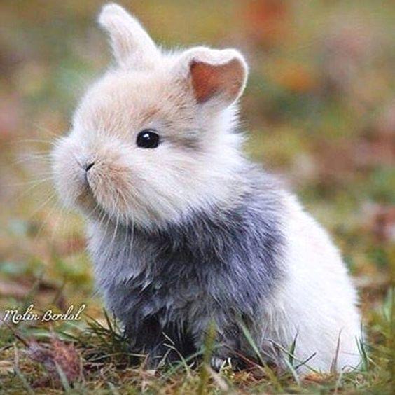 Пушистые зайцы фото и картинки (8)