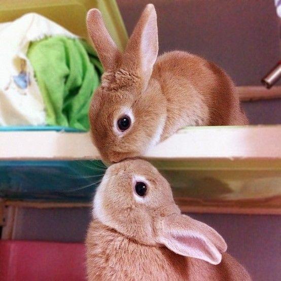 Пушистые зайцы фото и картинки (9)