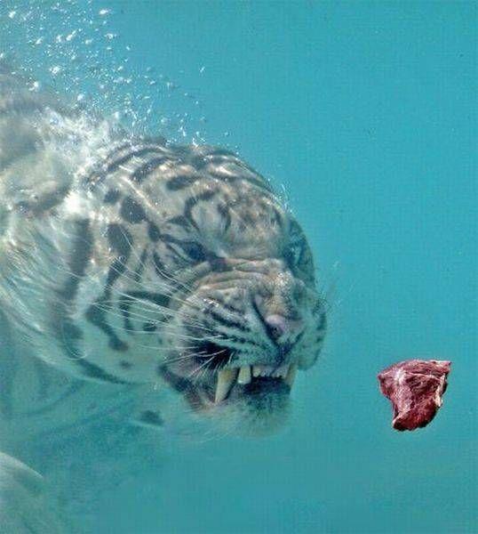 Смешные картинки и фото прикольных животных (1)