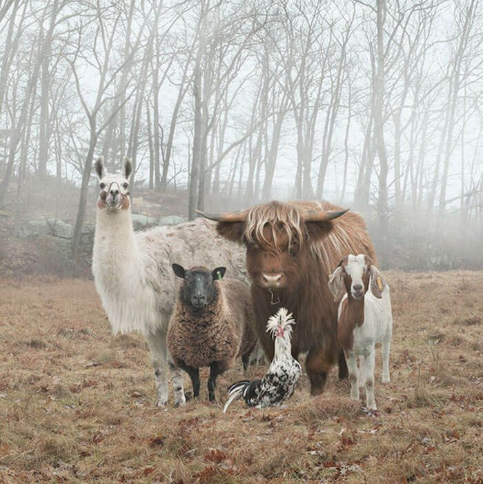 Смешные картинки и фото прикольных животных (12)