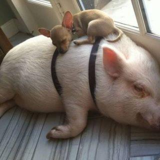 Смешные картинки и фото прикольных животных (31)