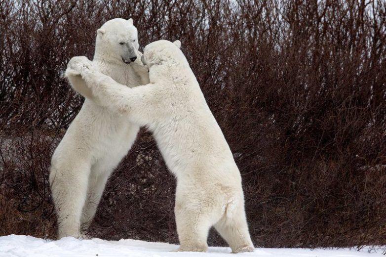 Смешные картинки с медведями - подборка (1)