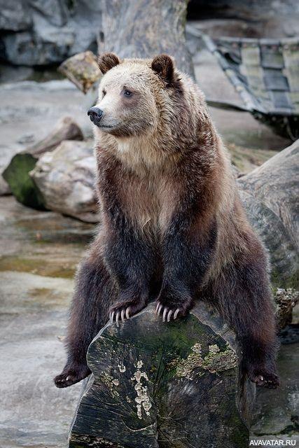 Смешные картинки с медведями - подборка (10)