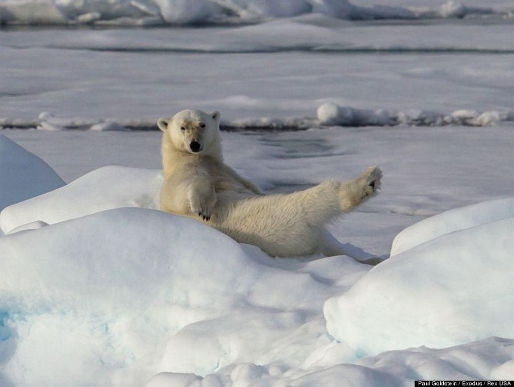 Смешные картинки с медведями - подборка (11)