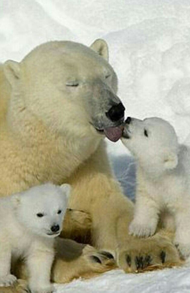 Смешные картинки с медведями - подборка (14)