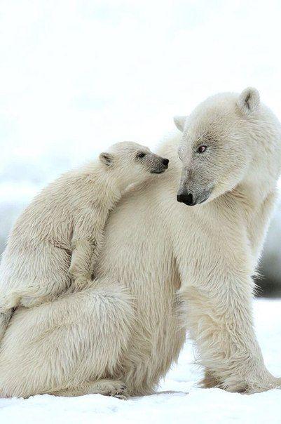 Смешные картинки с медведями - подборка (19)