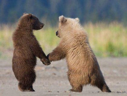 Смешные картинки с медведями - подборка (22)