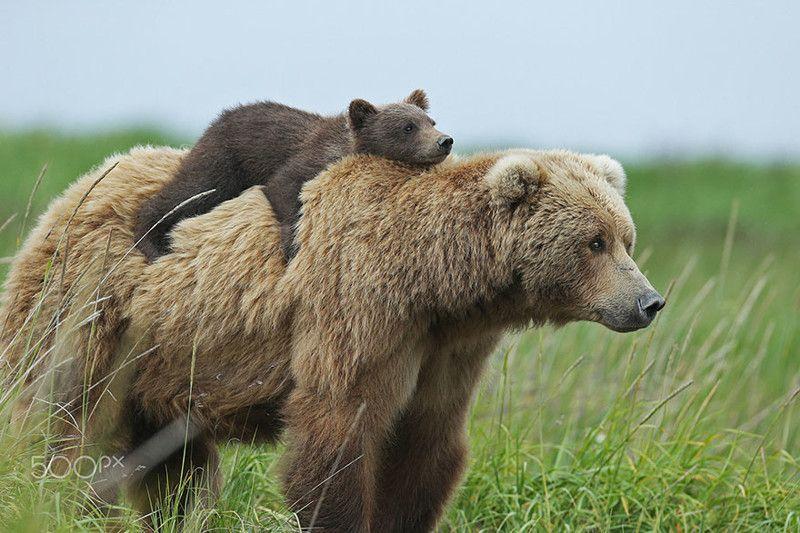 Смешные картинки с медведями - подборка (3)