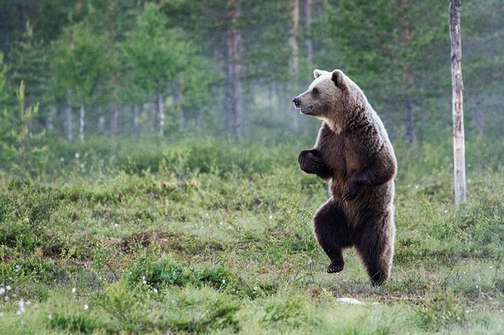Смешные картинки с медведями - подборка (5)