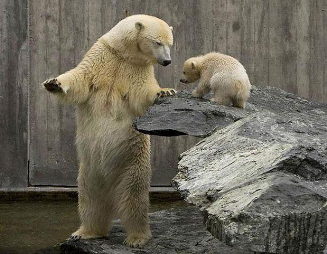 Смешные картинки с медведями - подборка (8)