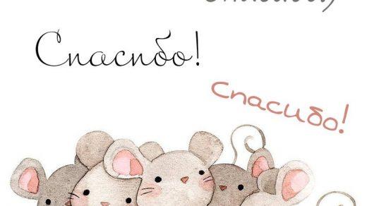 Спасибо зайка   приятные открытки с надписями (3)