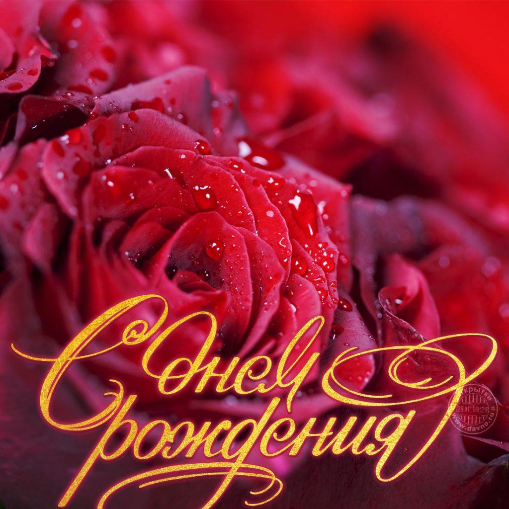 С днем рождения картинки розы красивые для девушки (12)