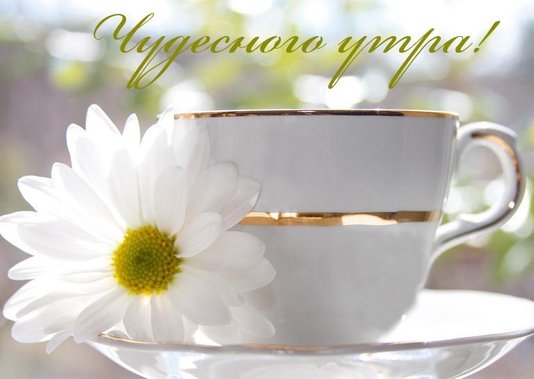 Доброе утро картинки красивые с надписью для друзей (12)