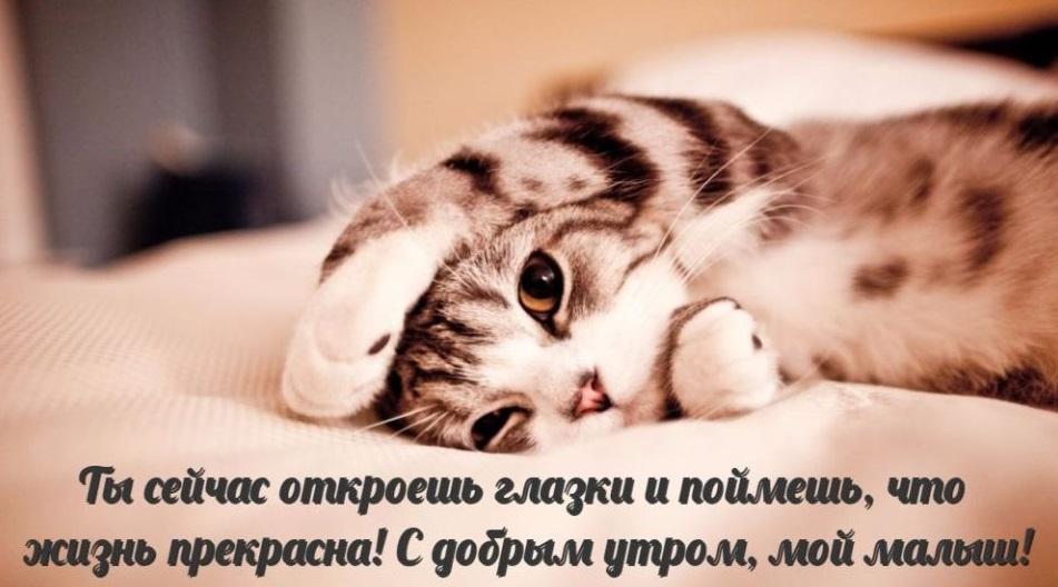 Доброе утро с поцелуем картинки для любимого (9)