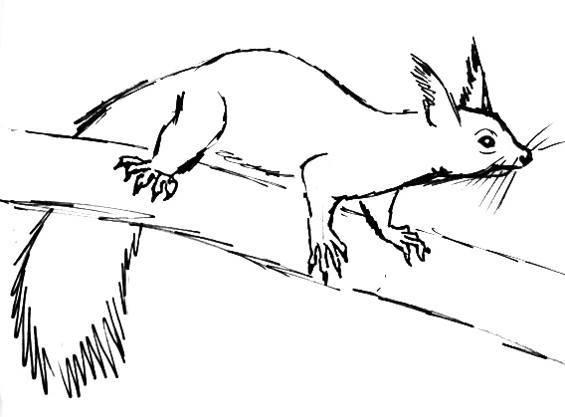 Как нарисовать белку из сказки о Царе Салтане поэтапно - рисунки (6)