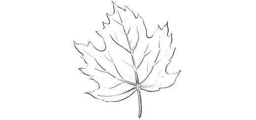 Как поэтапно нарисовать осенний лист карандашом для начинающих - рисунки (12)