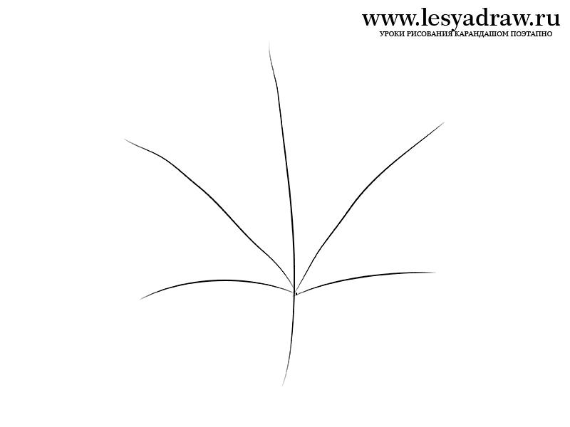 Как поэтапно нарисовать осенний лист карандашом для начинающих - рисунки (13)
