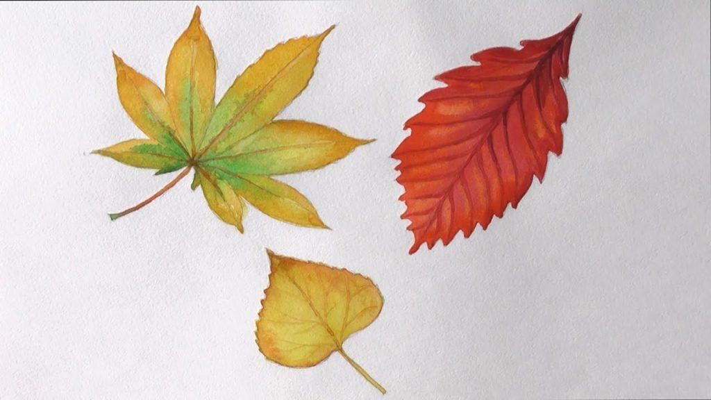 Как поэтапно нарисовать осенний лист карандашом для начинающих - рисунки (17)