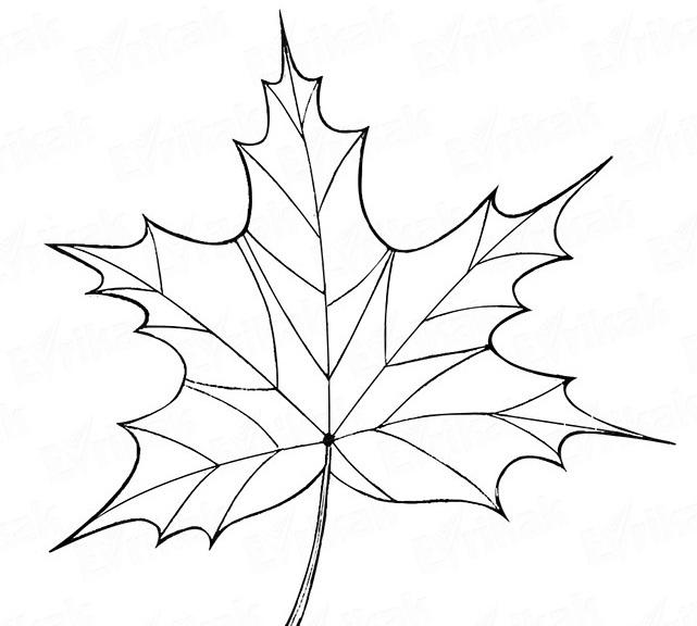 Как поэтапно нарисовать осенний лист карандашом для начинающих - рисунки (19)