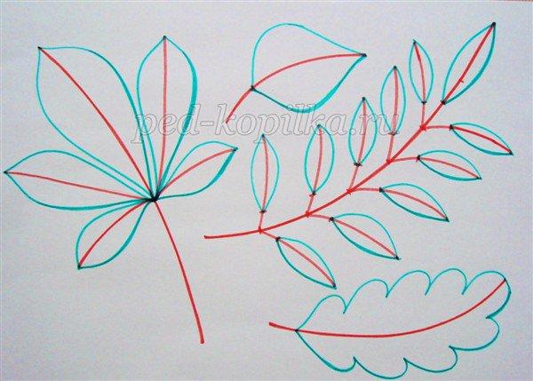 Как поэтапно нарисовать осенний лист карандашом для начинающих - рисунки (24)