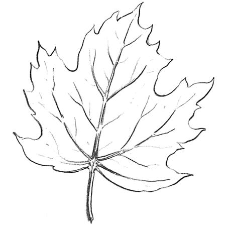 Как поэтапно нарисовать осенний лист карандашом для начинающих - рисунки (28)