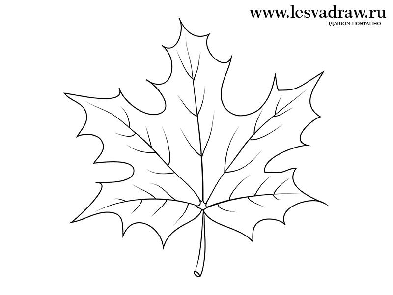 Как поэтапно нарисовать осенний лист карандашом для начинающих - рисунки (3)
