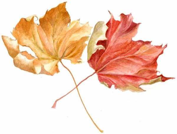 Как поэтапно нарисовать осенний лист карандашом для начинающих - рисунки (4)