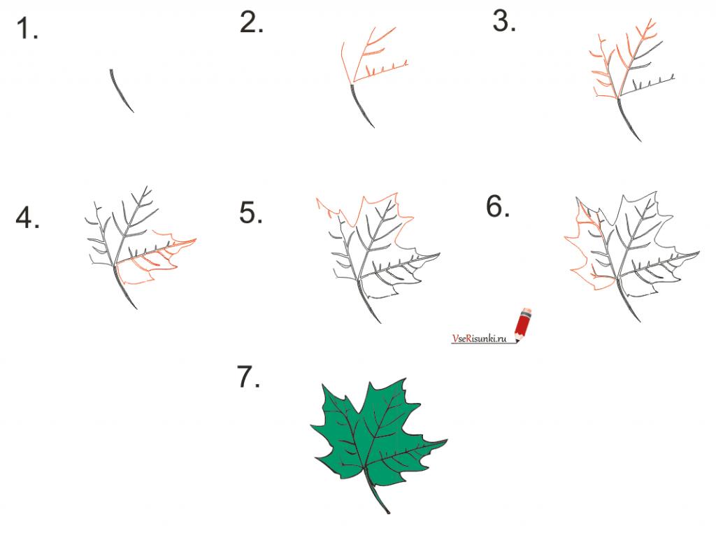 Как поэтапно нарисовать осенний лист карандашом для начинающих - рисунки (5)