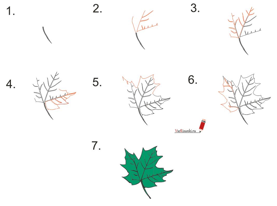 Как поэтапно нарисовать осенний лист карандашом для начинающих   рисунки (5)