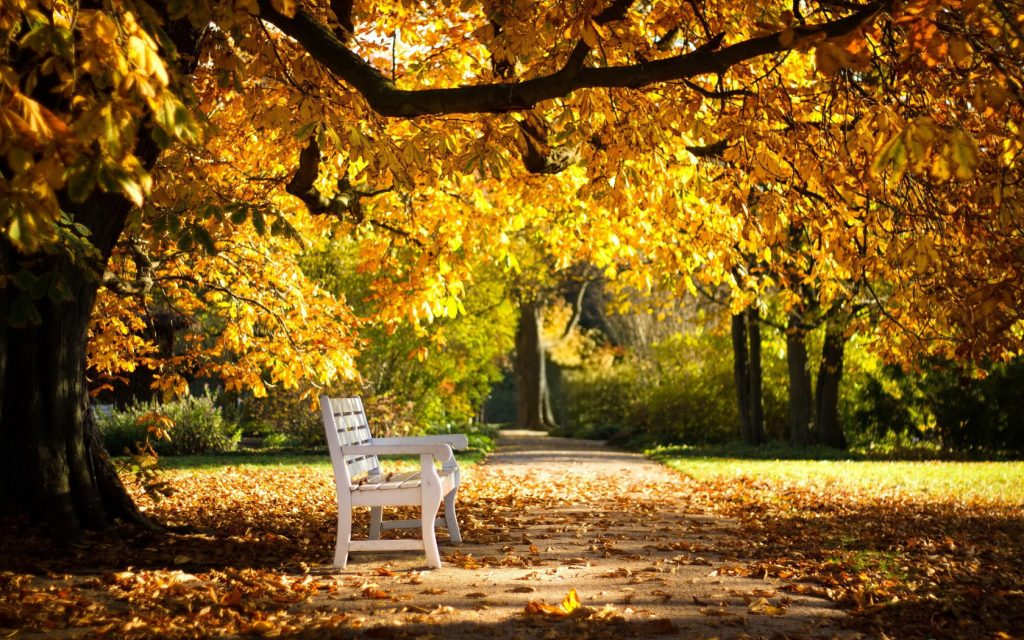 Картинки на рабочий стол ранняя осень сентябрь (10)