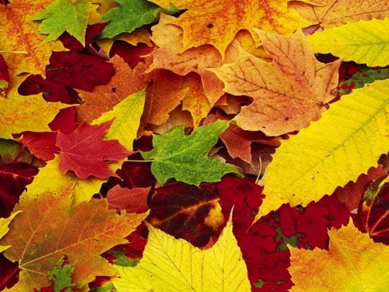Картинки осень сентябрь, октябрь и ноябрь для детей (1)