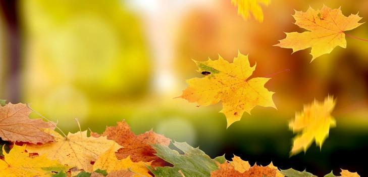 Картинки осень сентябрь, октябрь и ноябрь для детей (15)