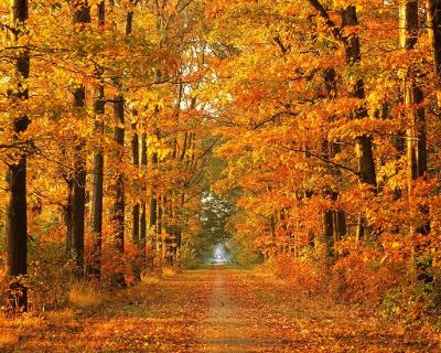 Картинки осень сентябрь, октябрь и ноябрь для детей (21)
