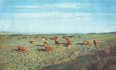 Картинки природа донского края (20)
