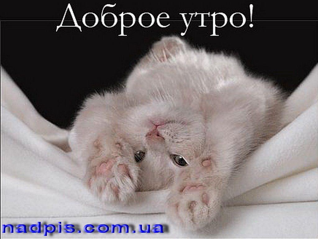 С добрым утром любимая картинки с котятами