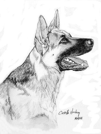 Красивые картинки про собак карандашом (10)