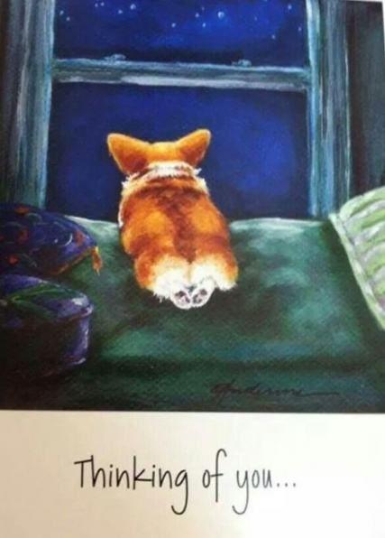 Красивые картинки про собак карандашом (13)