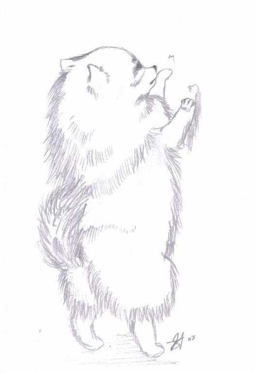 Красивые картинки про собак карандашом (15)