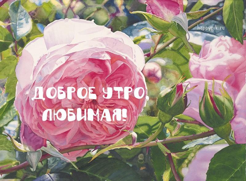 Красивые фото для любимой с добрым утром (11)