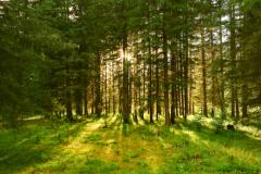 Лес в сентябре фото подборка (10)