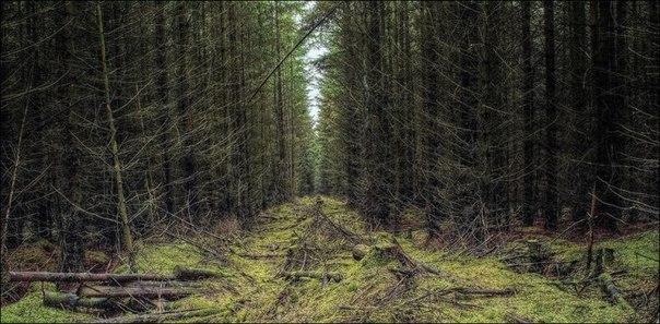 Лес в сентябре фото подборка (11)