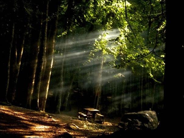 Лес в сентябре фото подборка (12)