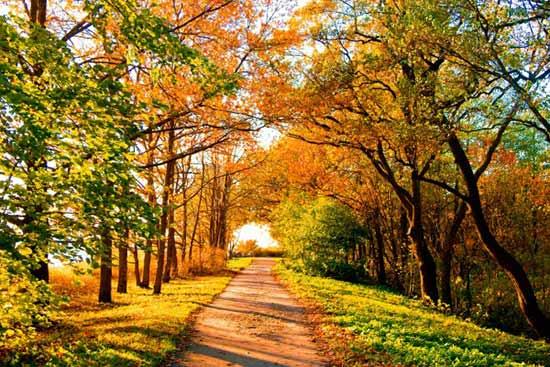 Лес в сентябре фото подборка (13)